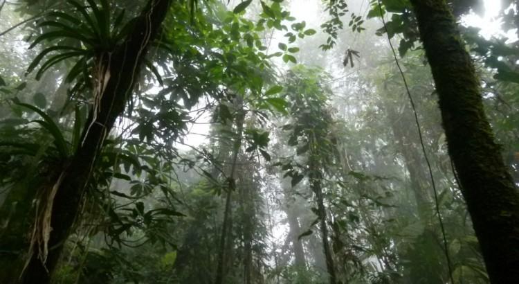Resultado de imagen para bosques primario
