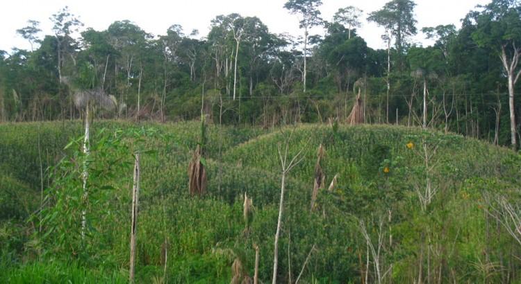 Pacahuara deforestacion mais