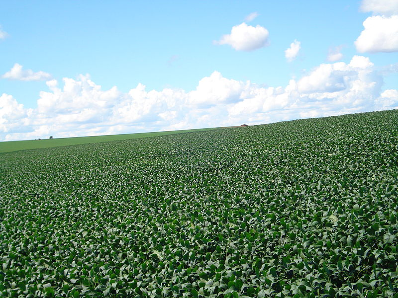 Plantation de soja au Brésil