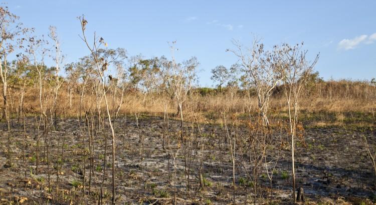 deforestation amazonie brulis