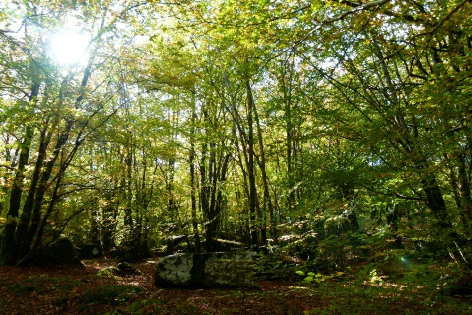 La forêt tempérée
