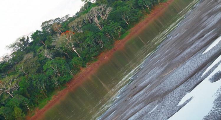 La desaparición del bosque de los Mayas  En diciembre 2011, el climatólogo Ben Cook hizo un descubrimiento que demostraba la relación causa efecto de la desaparición de la civilización Maya. Ésta se debió principalmente a la deforestación. Sus descubrimientos han probado que la destrucción de los bosques provocó una disminución de las precipitaciones y continuas sequias que acudieron a la civilización Maya.