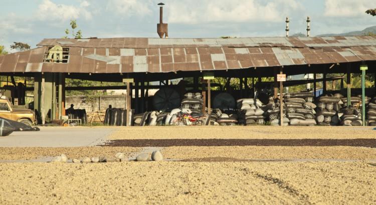 Tomemos el ejemplo del café que usted se toma por la mañana o del expresso de después de comer. El café crece en los climas tropicales y necesita sombra para crecer. Un estudio realizado en Costa Rica demuestra que un cafetal cercano al bosque aumenta en 20% su producción y en 17% su calidad