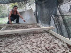 Pépinières volantes - Agroforesterie