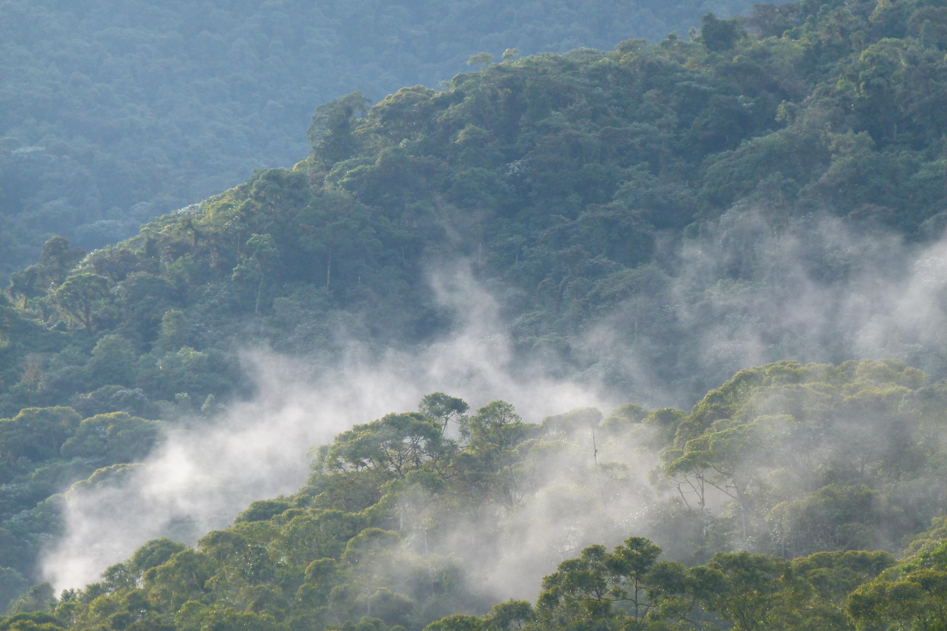 los diferentes bosques: