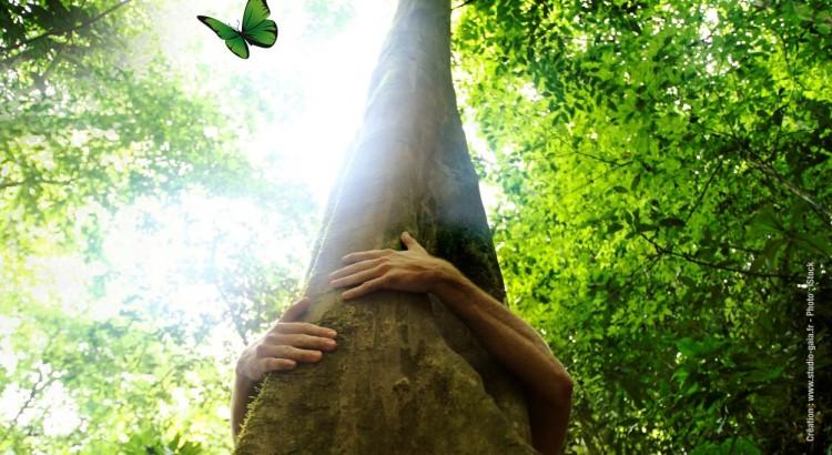 la forêt lieu de loisirs et d inspiration envol vert