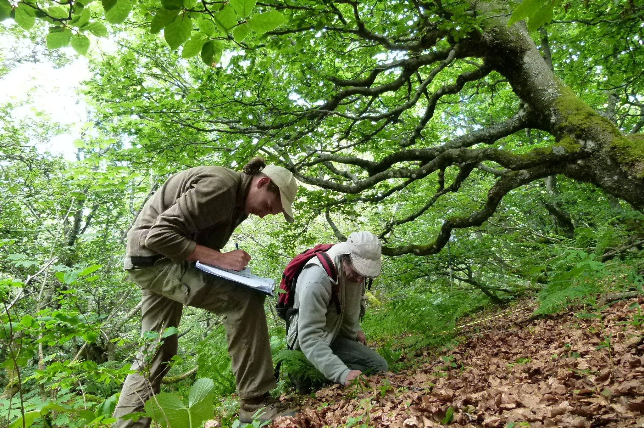 Comment devenir charge d'etudes naturalistes