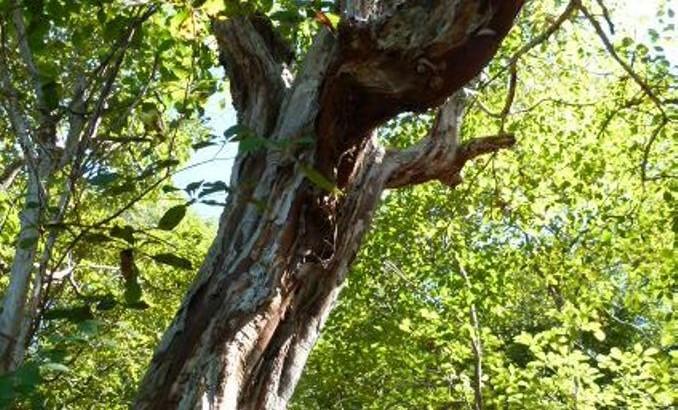Forêt sèche
