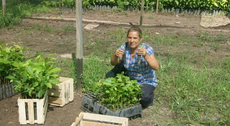 Deisy Tiese Jimenz, beneficiara del proyecto  viniendo a buscar sus brotes del Nogal Maya.