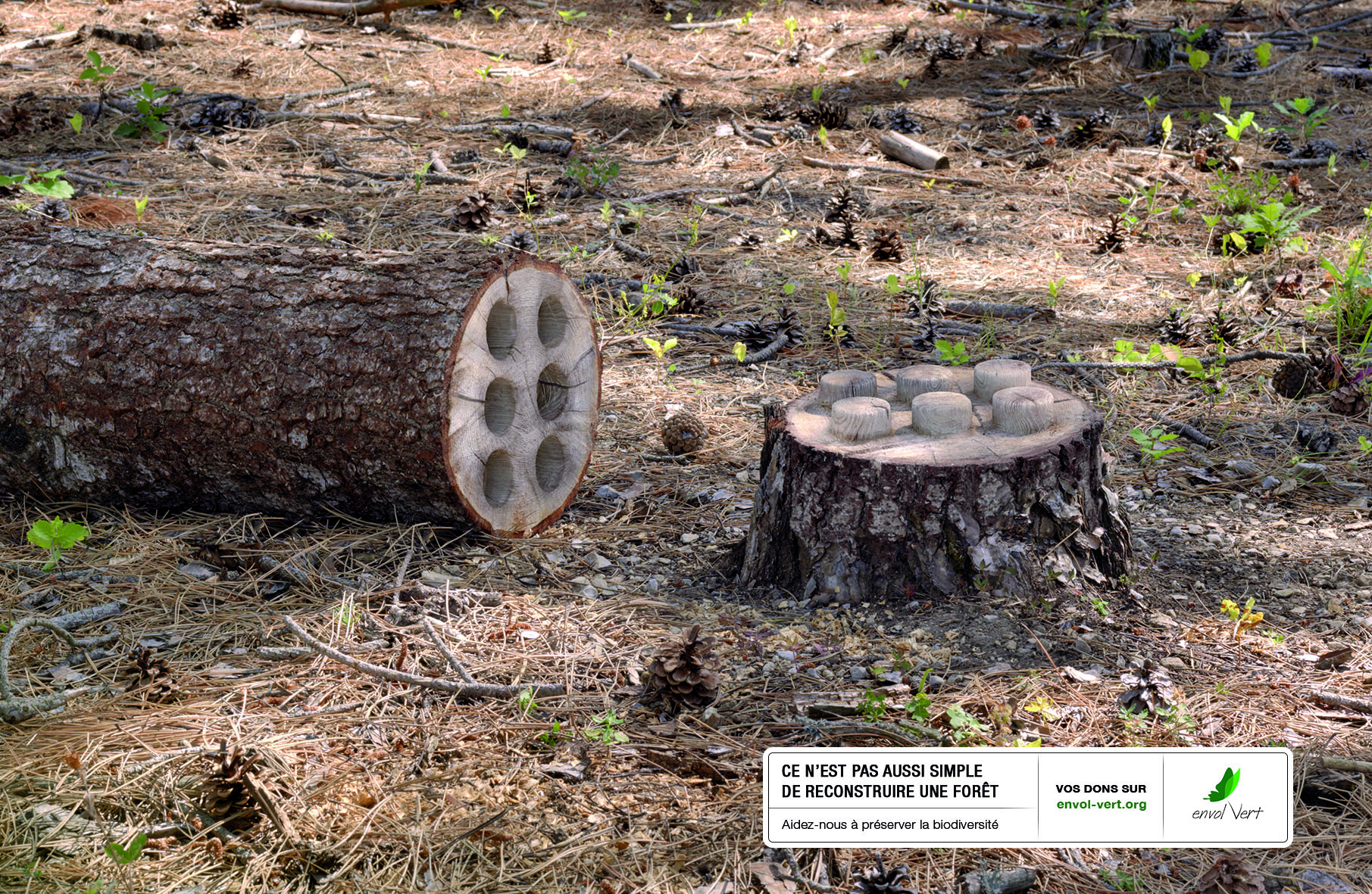 """Top Le PNUE soutient """"Tree in Pieces"""" pour Envol Vert! - Envol Vert NI25"""