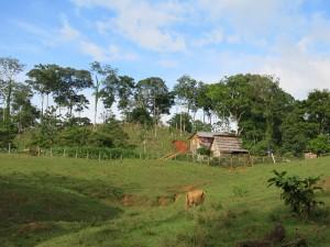 [Projet SYLVO]_ferme et deforestation.©T.Martin