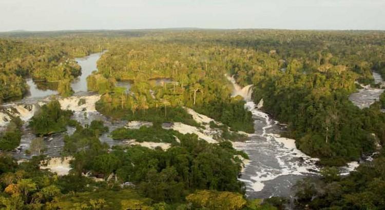 le rôle des forêts et les nombreux services qu elle nous rend