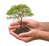 10910322-arbre-dans-des-mains