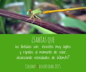 colombia_diversidad_2015_2