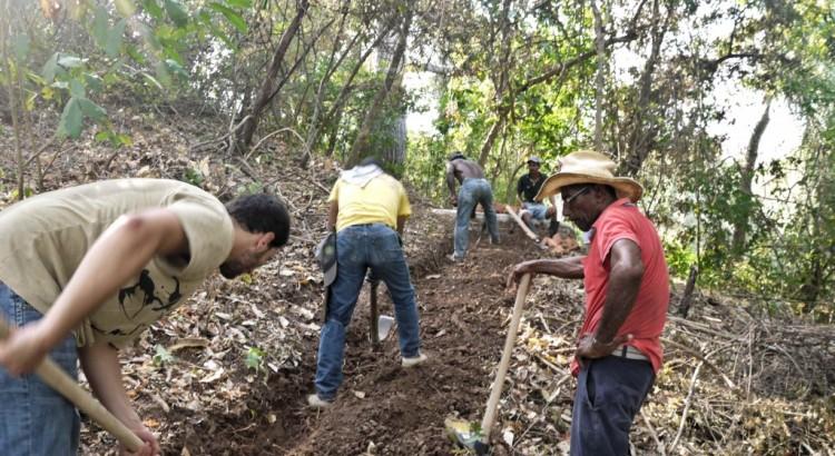 noyer Maya / élevage soutenable