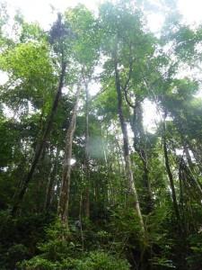 ecotourisme amazonie