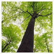 Témoignages de dérèglements climatiques, solutions d'adaptation et d'atténuation, Empreinte Forêt de nos produits.  Envol Vert exige de la COP 21......