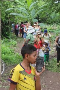 reforestation et noyer maya