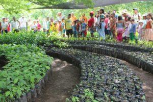 reforestation_noyermaya_palomino2