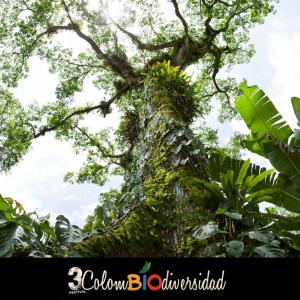 paisajes_colombiod