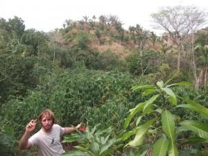 Noyer maya restauration forestière