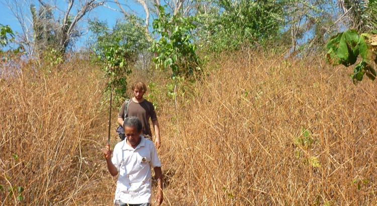Noyer maya et restauration forestière avril 2016