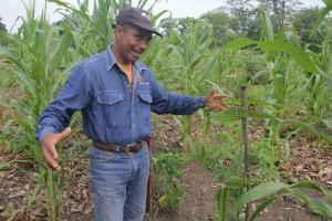 Victor en medio de plantaciones de yuca (© Jérôme Decoster).
