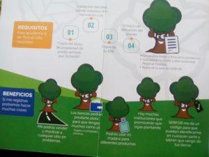 folleto registracion plantaciones