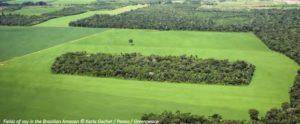 Biens de consommation et déforestation