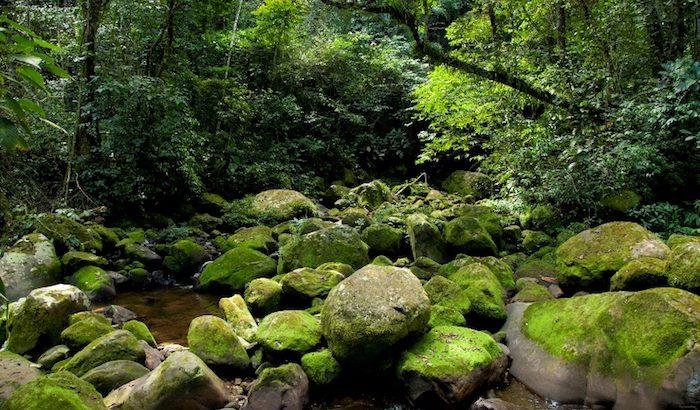 foret_tropicale_riviere_ldurant