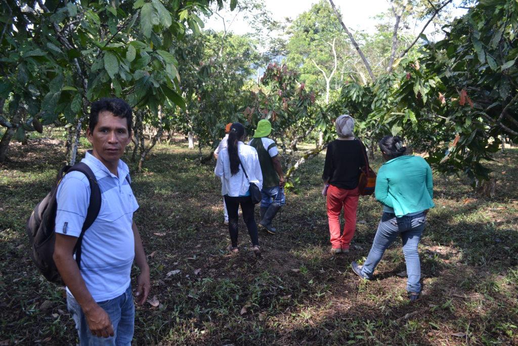 Pasantia Jackfruit © MANTUNES
