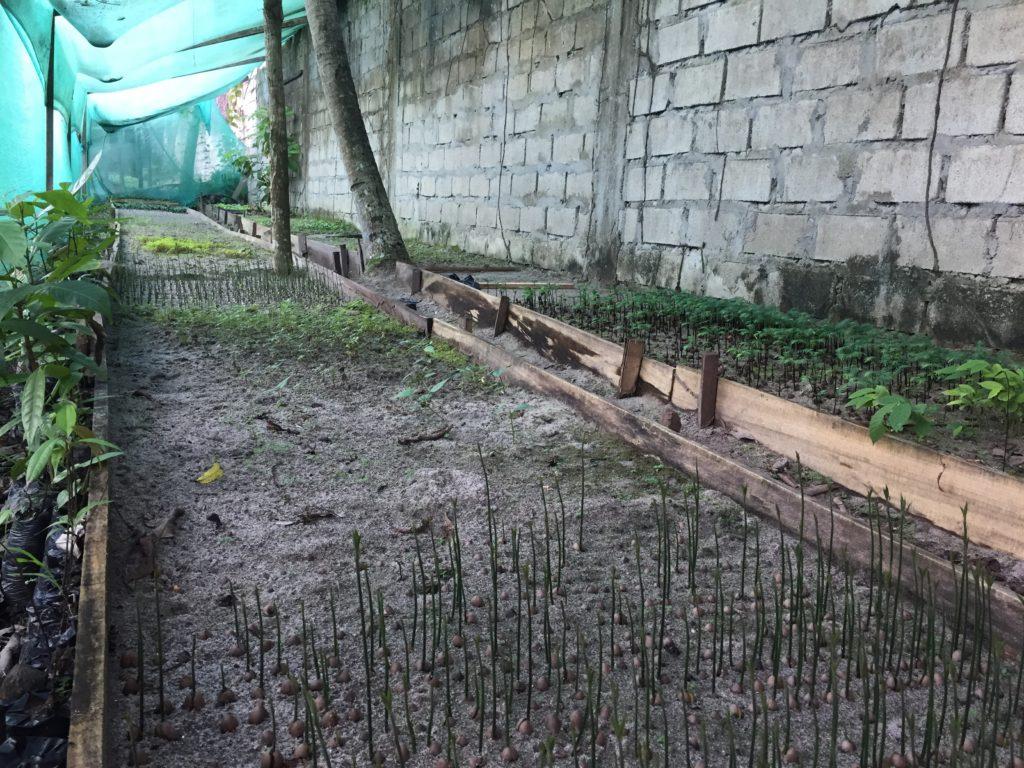 [AGROFO]Diversité de plantules en croissance dans le germinadero à Pichanaki_Mars 2018@M.CORREIA ANTUNES