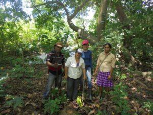 Reforestation-y-conservacion-ecologica-parcela-Hernan-Castrillo_mayo2018