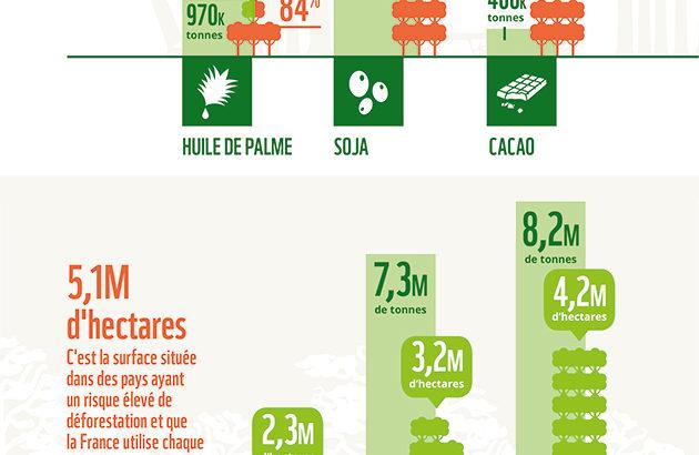 infographie-deforestation-actu-environnement