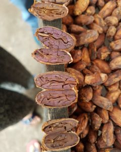 cacao péruvien
