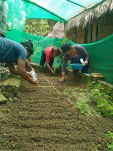 semis d'espace de germination
