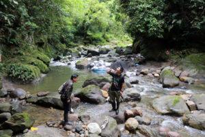Trekking en forêt