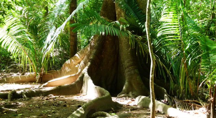 La forêt nous protège des virus