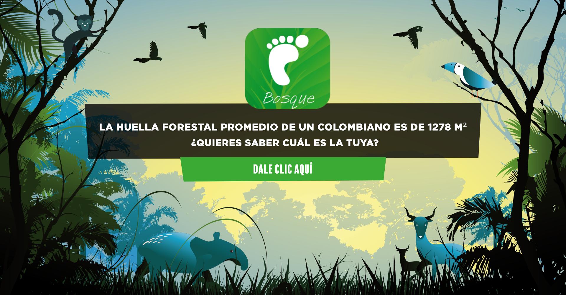 La huella forestal de un colombiano es de 1278m²