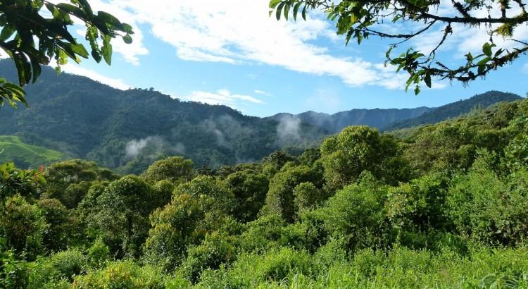 Forêt reserve