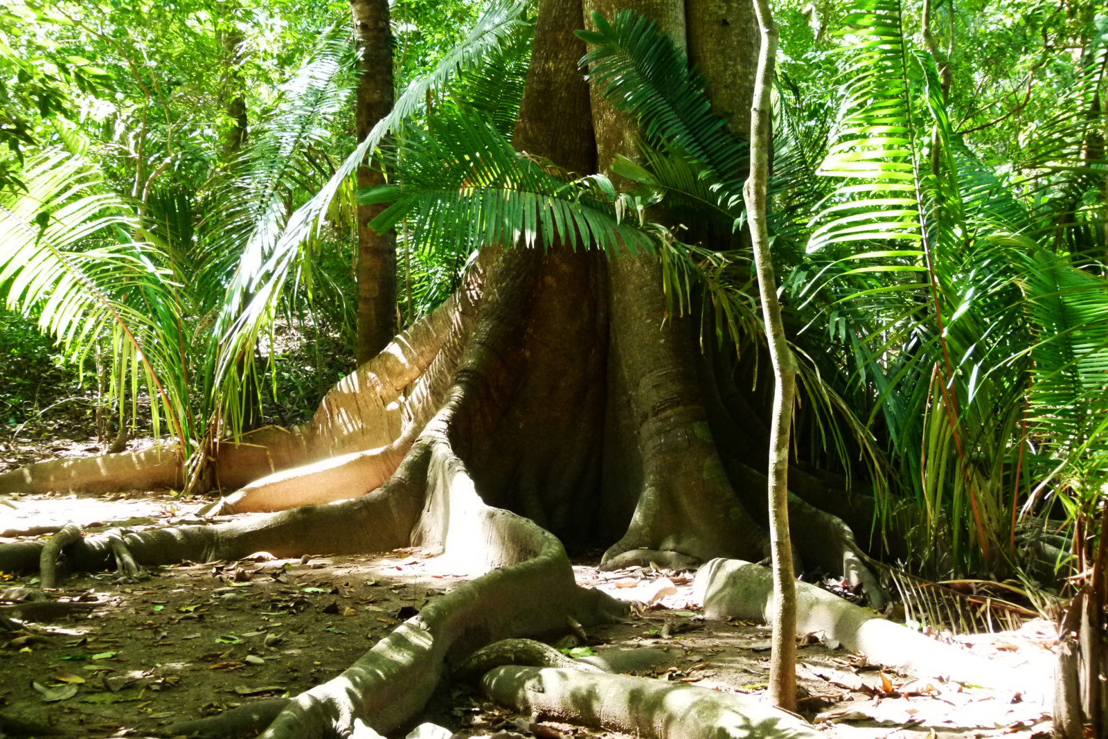 Les forêts nous protègent aussi de l'apparition de nouveaux virus